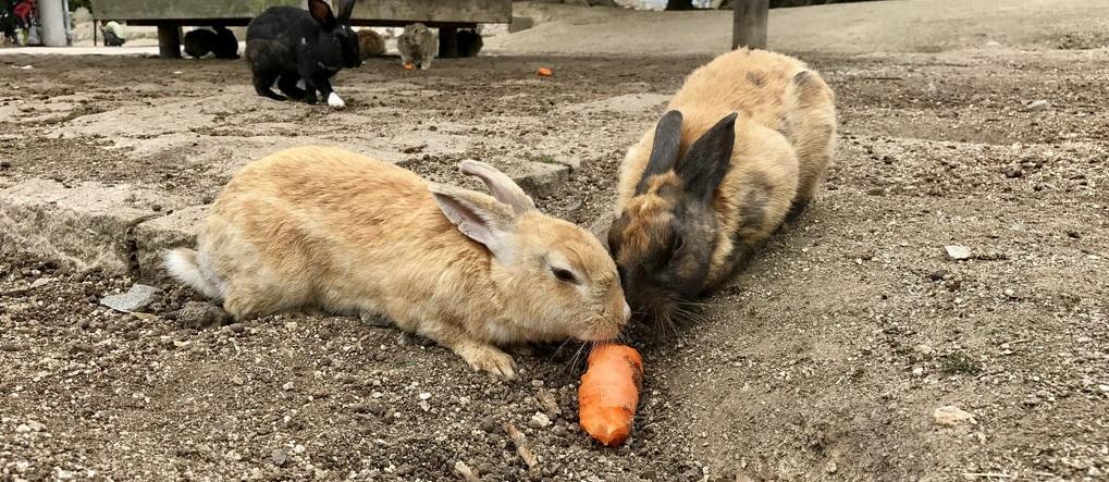 Rüyada Tavşan Ölü Yakalamak