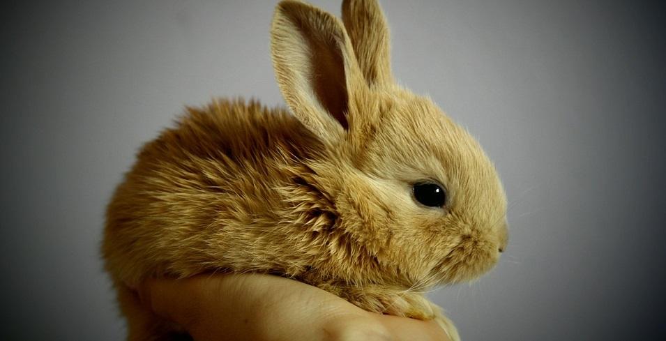 Rüyada Tavşan Yakalamak ve Yemek