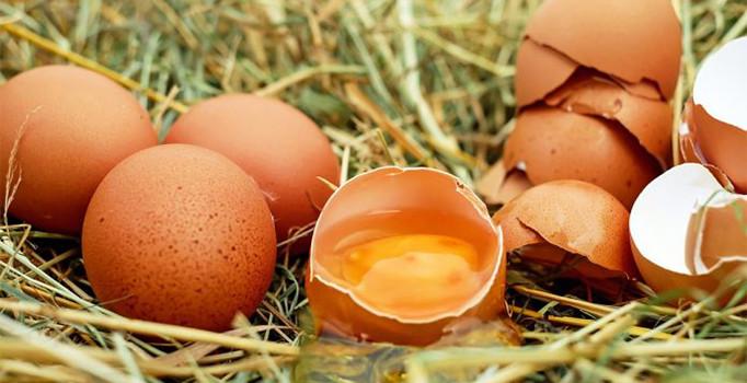 Rüyada Kuş Veya Tavuk Yumurtasını Çiğ Görmek