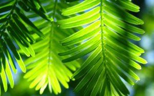 Rüyada Ağaçta Yeşil Yaprak Görmek