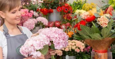 Rüyada Salon Çiçeği Görmek