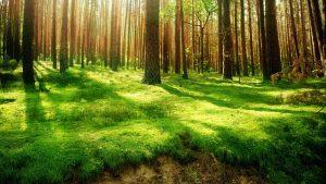 Rüyada Ormanlı Manzara Görmek