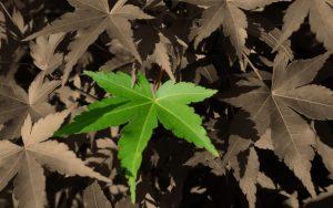 Rüyada Yeşil Yaprak Yediğini Görmek