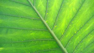 Rüyada Yeşil Yaprak Kopardığını Görmek