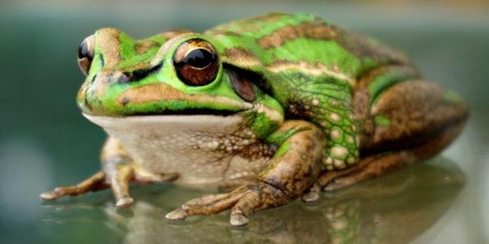 Rüyada Suda Büyük Kurbağa Görmek