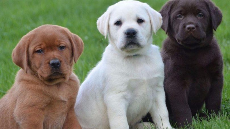Rüyada Birden Fazla Köpek Görmek