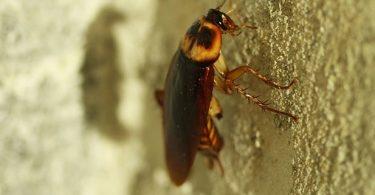 Rüyada Evde Böcek Görmek