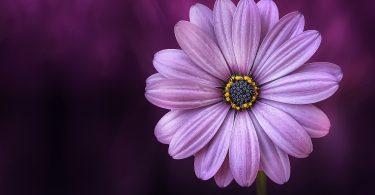 Rüyada Mezarda Çiçek Görmek