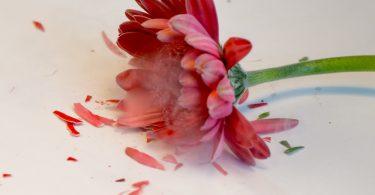 Rüyada Çiçek Kırıldığını Görmek