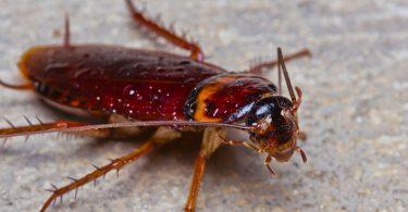 Rüyada Hamam Böceği Ölüsü Görmek