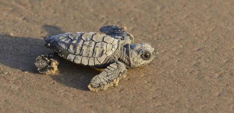Rüyada Kabuksuz Kaplumbağa Görmek