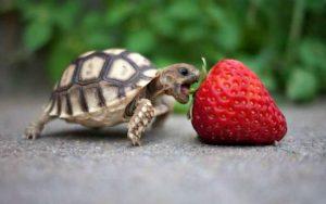 Rüyada Kabuksuz Kaplumbağa Yavrusu Görmek