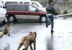 Rüyada Köpek Koşturduğunu Görmek