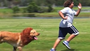 Rüyada Kuduz Köpek Saldırısından Kaçmak