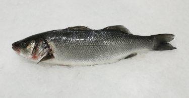 Rüyada Levrek Balığı Görmek