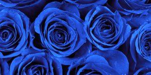 Rüyada Mavi Gül Aldığını Görmek