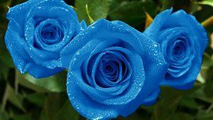 Rüyada Mavi Gül Diktiğini Görmek