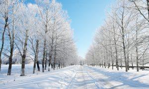 Rüyada Ormanda Zamansız Kar Görmek