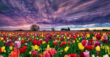 Rüyada Rengarenk Çiçekler Görmek