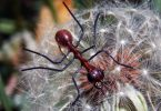 Rüyada Çok Karınca Görmek