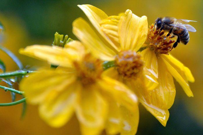 Rüyada Küçük Bal Çiçek Arısı Isırıp Sokması