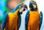 Rüyada Konuşan Papağan Görmek