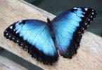 Rüyada Mavi Kelebek Görmek