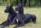 Rüyada Siyah Köpek Kovalaması