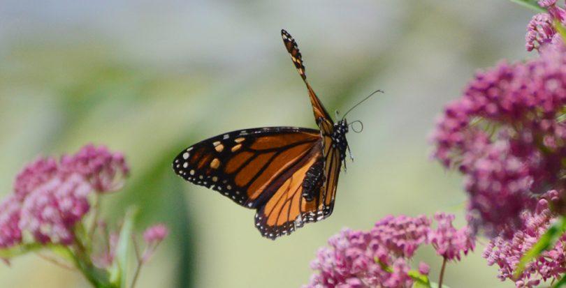 Rüyada Uçan Kelebek Görmek