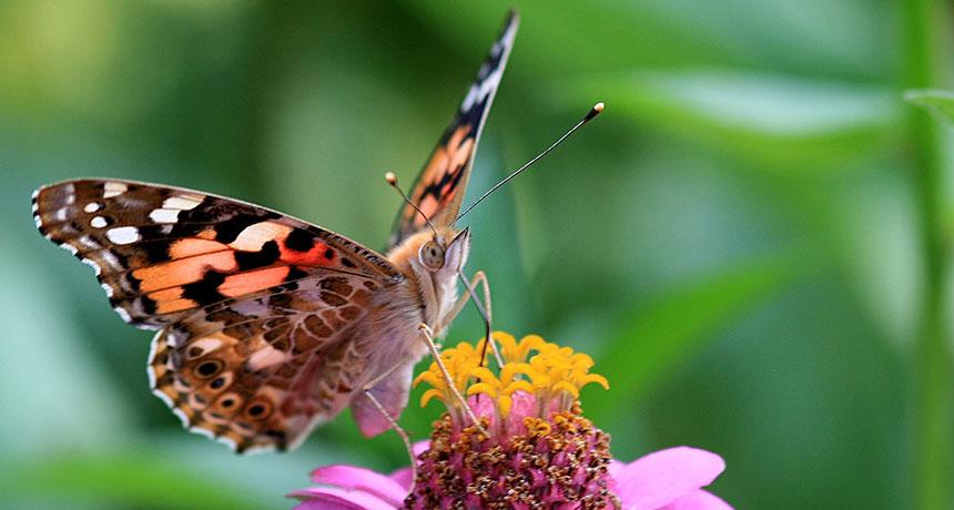 Rüyada Uçan Kelebek Görmek ve Peşine Düşmek