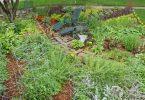 Rüyada Sebze Bahçesi Görmek