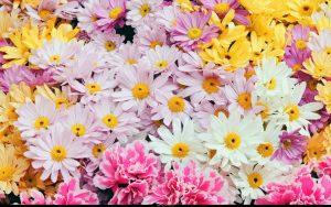 Rüyada Canlı Çiçek Kopardığını Görmek