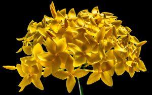 Rüyada Canlı Çiçek öldürdüğünü Görmek