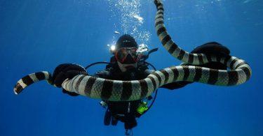 Rüyada Deniz Yılanı Görmek