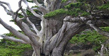 Rüyada Kurumuş Ağaç Görmek