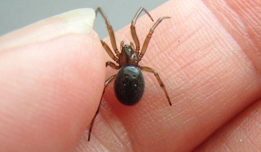 Rüyada Üzerinde Örümcek Görmek ve Almak