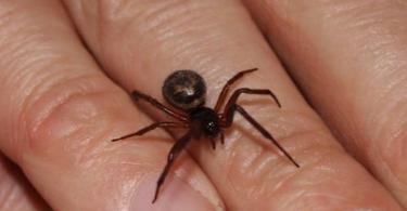 Rüyada Üzerinde Örümcek Görmek