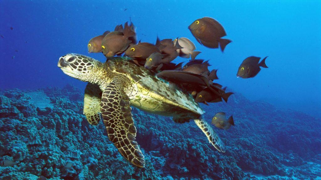 Rüyada Su Kaplumbağası Görmek