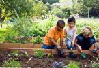 Rüyada Bahçe Bellemek