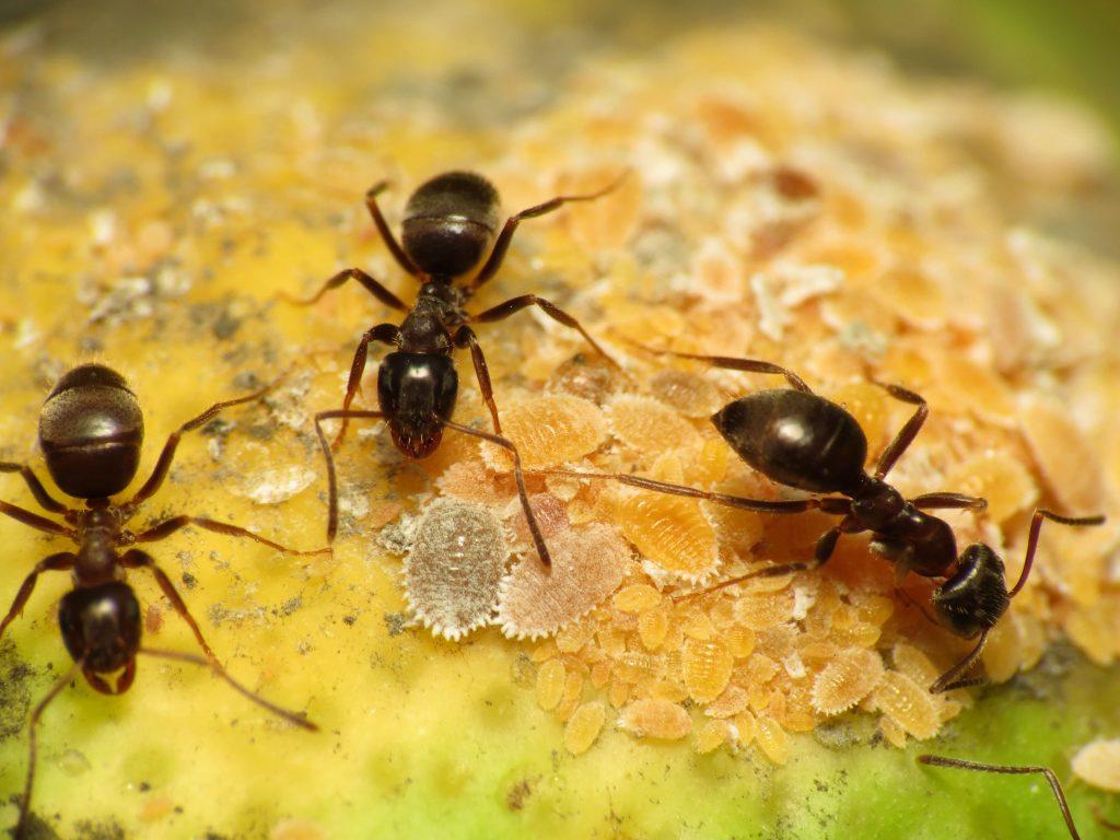 Rüyada Siyah Karınca Görmek ve Ezmek
