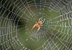 Rüyada Örümcek Ağ Görmek