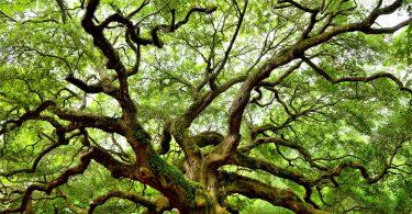 Rüyada Ceviz Ağacı Sulamak