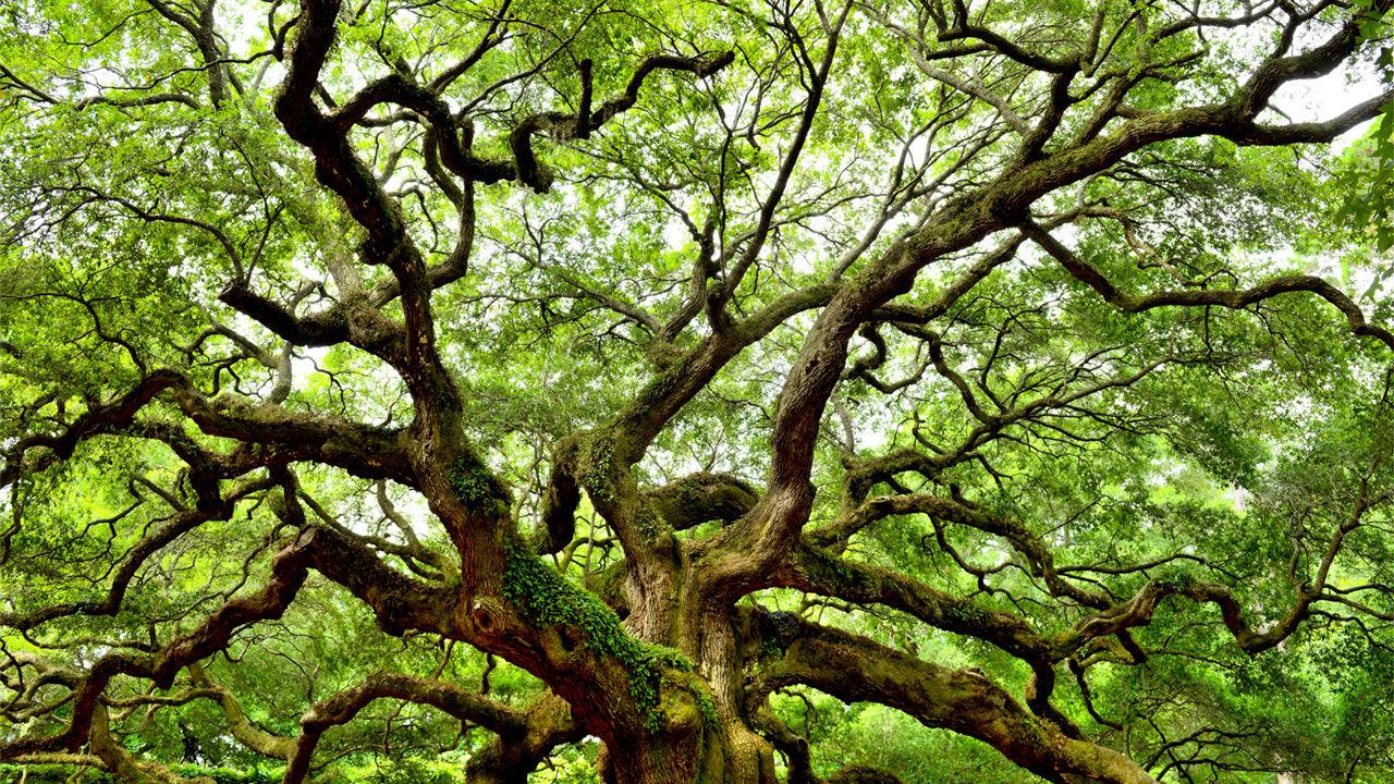 Rüyada Ağaç Sulamak Tabiri Ne Demek