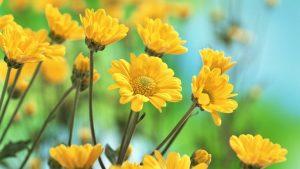 Rüyada Bahçede Sarı Çiçek Görmek