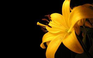 Rüyada Kırık Sarı Çiçek Görmek