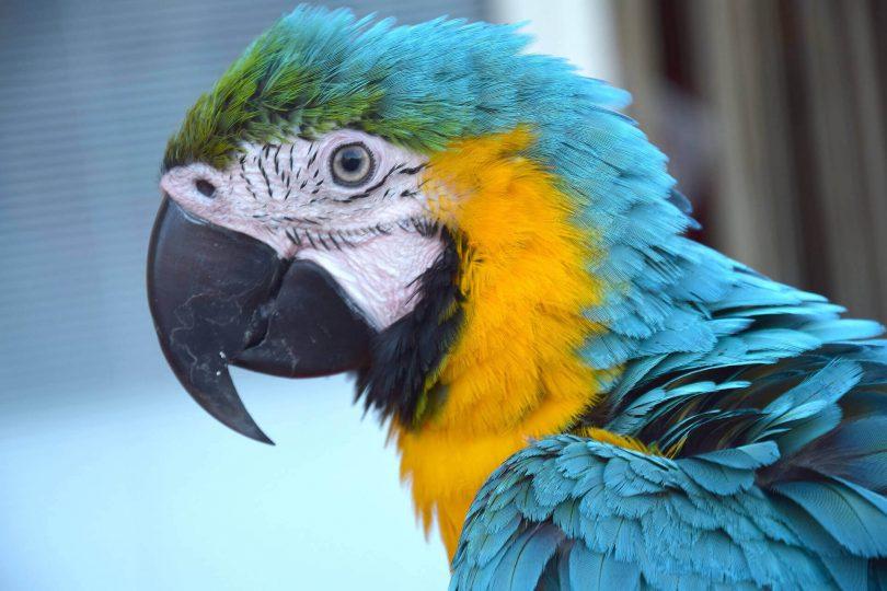 Rüyada Mavi Muhabbet Kuşu Görmek