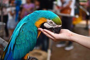 Rüyada Mavi Muhabbet Kuşu Konuştuğunu Görmek
