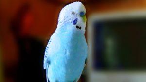 Rüyada Ölü Mavi Muhabbet Kuşu Görmek