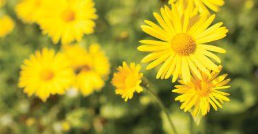 Rüyada Sarı Çiçek Görmek