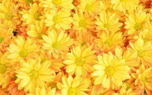 Rüyada Sarı Çiçek Topladığını Görmek